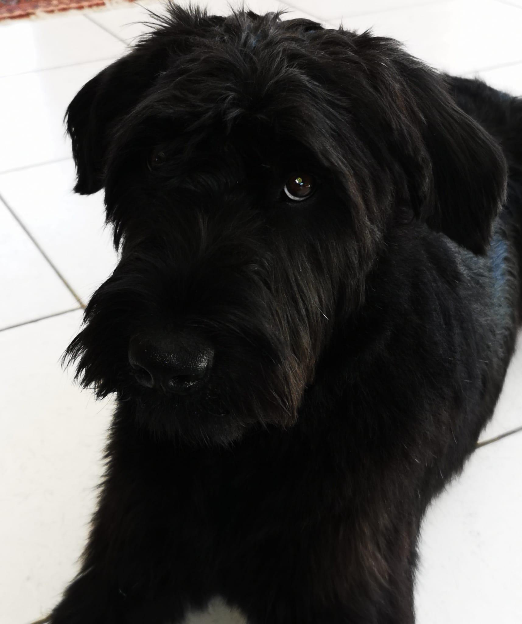 Black Molly